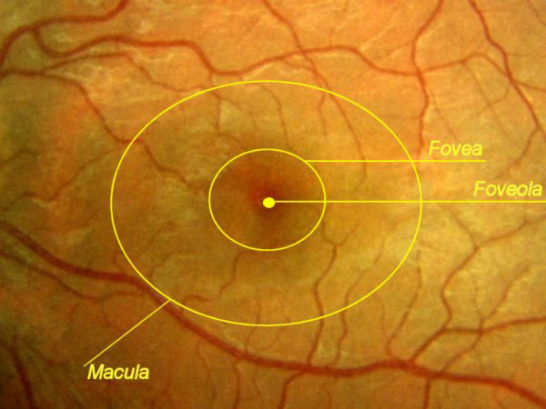 ophthalmologist albuquerque nm high country macula - 600×450