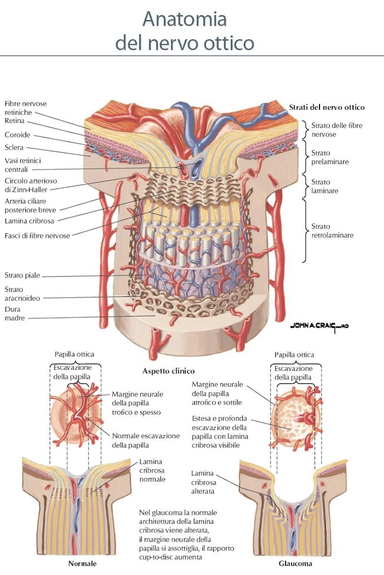 Hermosa Ppt Anatomía Retina Componente - Anatomía de Las Imágenesdel ...